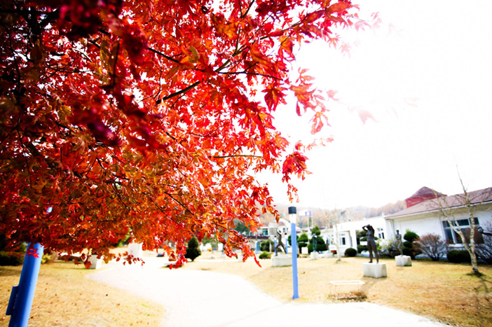 Fall foliage at Mooee Arts Center