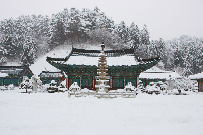 Woljeongsa Temple (top) & Fir Tree Road (bottom)