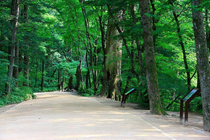 Camino verde en el templo Woljeongsa.