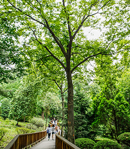 洪陵(ホンヌン)樹木園