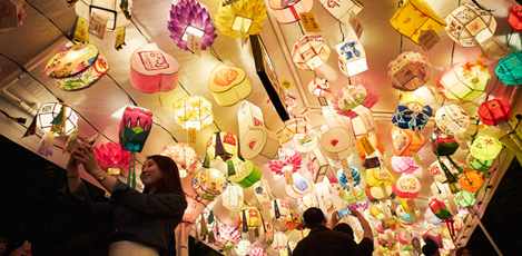 Traditional Charm & Excitement Meet at the Lotus Lantern Festival