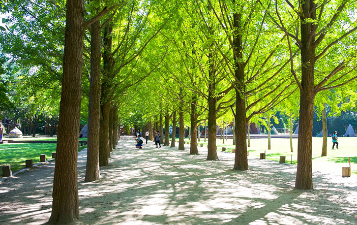 Metasequoia Road (Credit: Chuncheon-si)