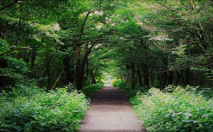 思連伊森林步道(圖片來源: 濟州市)