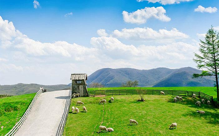 Foto) Schaffarm Daegwallyeong