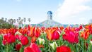Вечная весна в оранжереях ботанических садов!