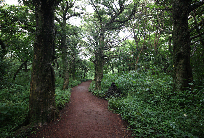 A walking trail at Bijarim Forest