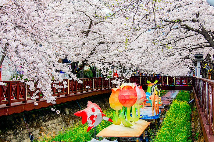 Yeojwacheon Stream's cherry blossom road