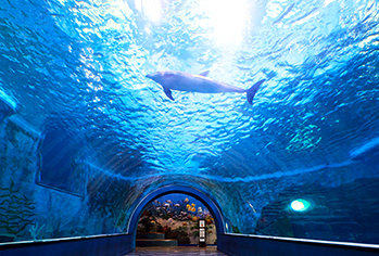 Whale Life Experience Museum