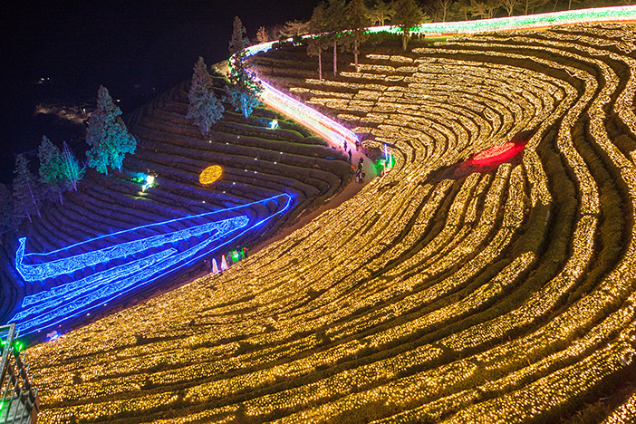 Boseong Tea Plantation Light Festival (Bottom credit: Boseong-gun Office)