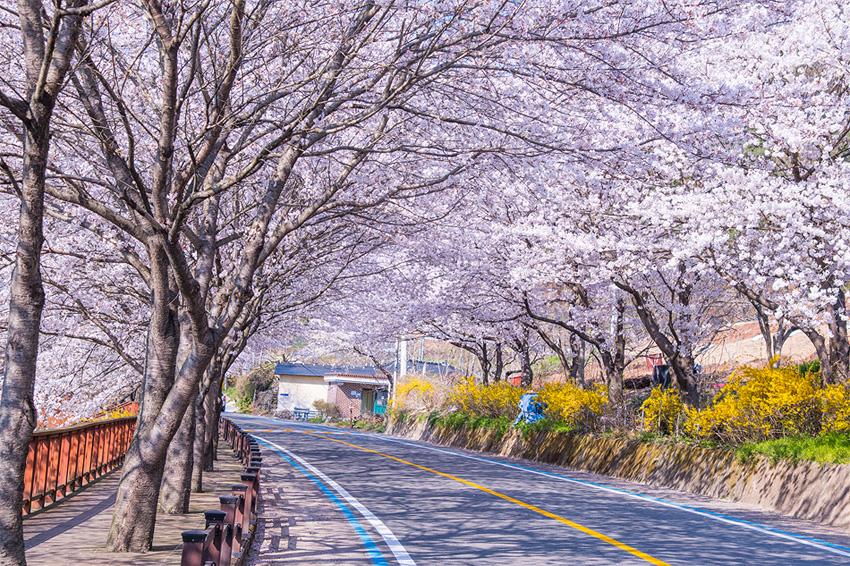 Chemin des cerisiers Seomjingang