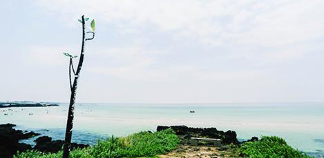 为疲惫的你奉上2017济州旅行指南——东部海边篇