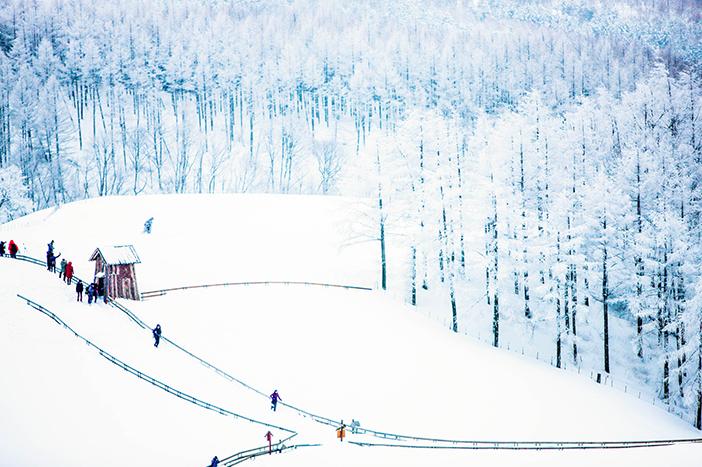 大关岭羊群牧场的雪景