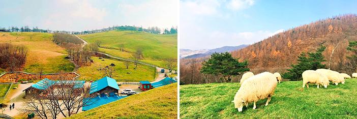 羊群牧场的夏天及秋日