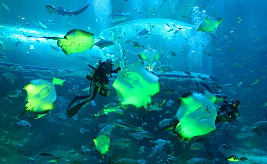 Основной аквариум
