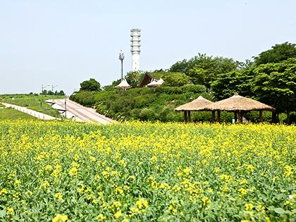 Весенние прогулки в Сеуле по знаменитым аллеям для любования цветением