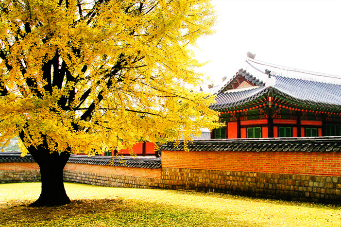 Fall at Gyeongbokgung Palace & Samcheong-dong