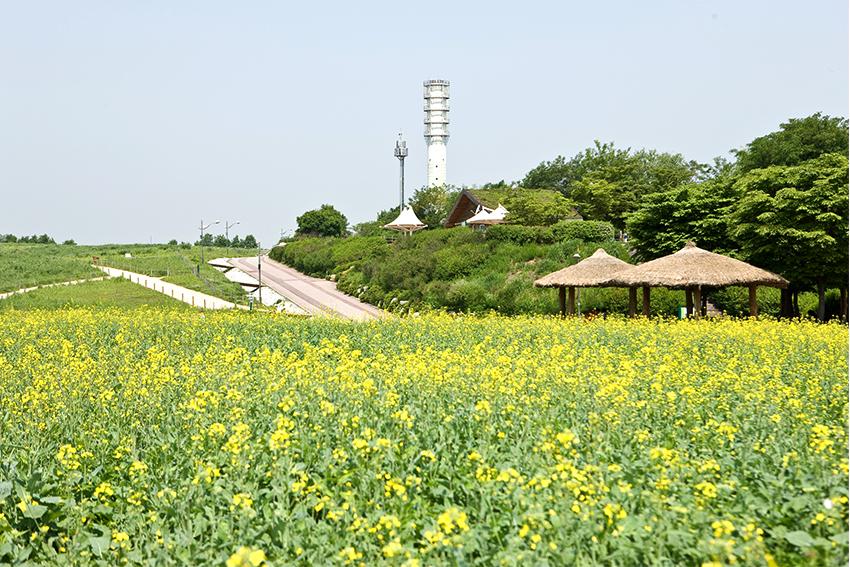 首爾天空公園賞花道路