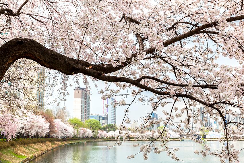 Весеннее цветение в окрестностях озера Сокчхон
