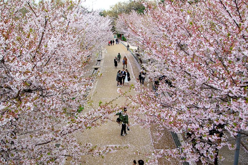 Сеульский лес (Источник: мэрия Сеула)