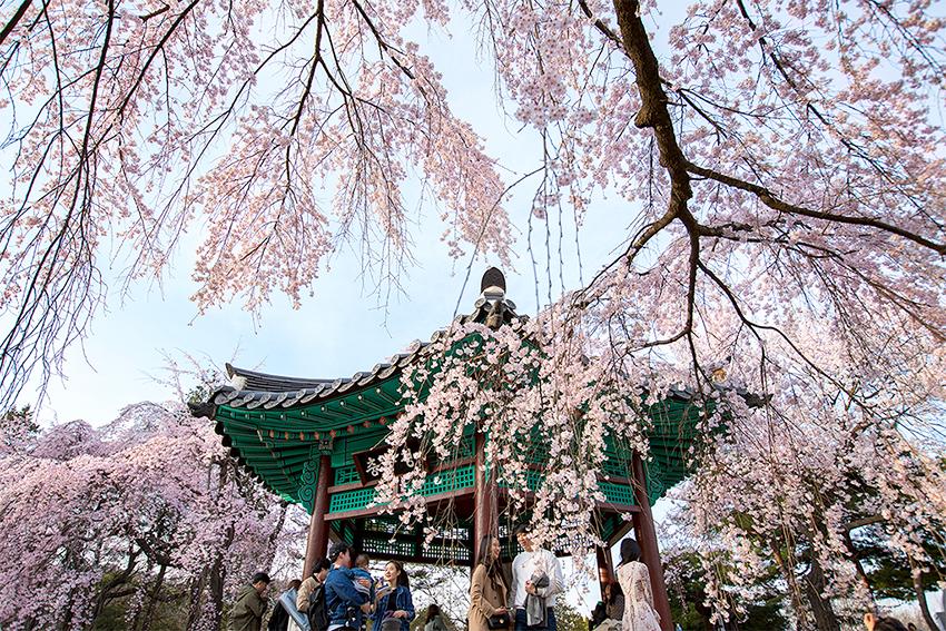 Сеульское Национальное кладбище (Источник: мэрия Сеула)