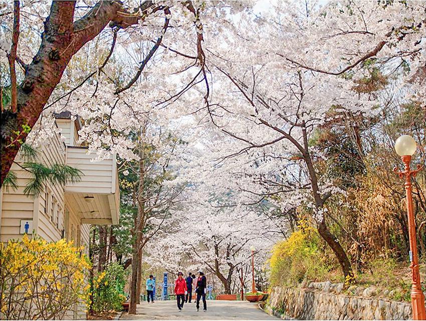Парк Самчхон (Источник: мэрия Сеула)