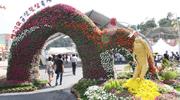 めざせ健康美人、高麗人蔘の旅!錦山高麗人蔘祭り