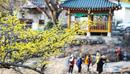 Встреча весны на фестивале цветения кизила в Куре