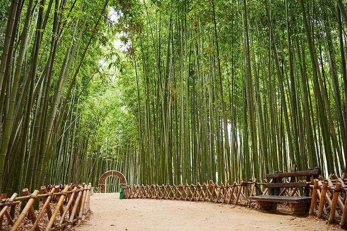 Forêt de bambous Simni