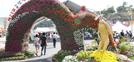 Un viaje saludable: Festival de Insam de Geumsan