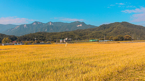 Need An Unforgettable Trip In The Korean Countryside? Try Geochang