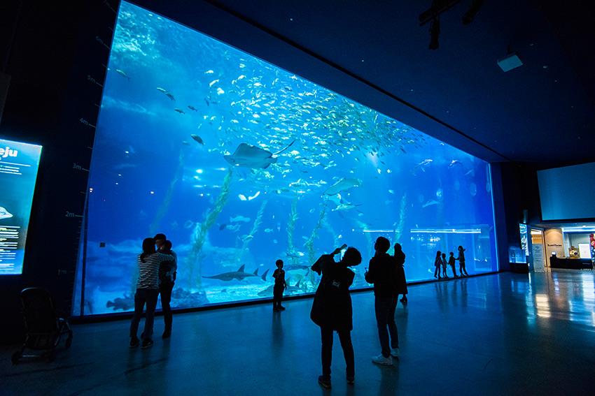 濟州Aqua Planet海洋世界的超大主水槽