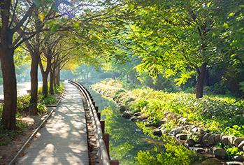 ソウルの森