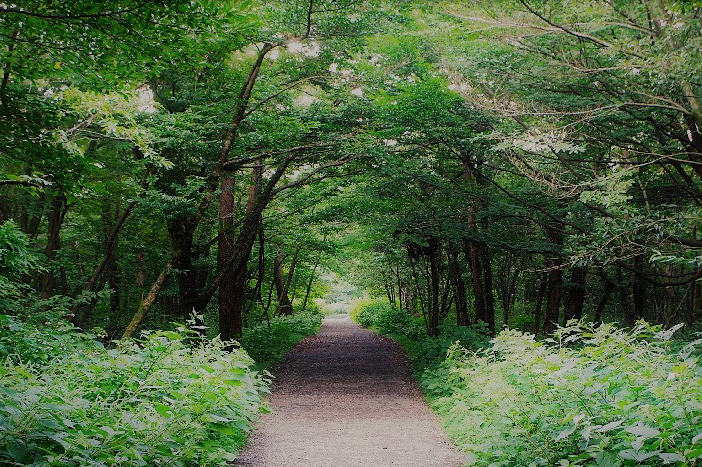 Saryeoni Forest Trail (Credit: Jeju Special Self-governing Province)