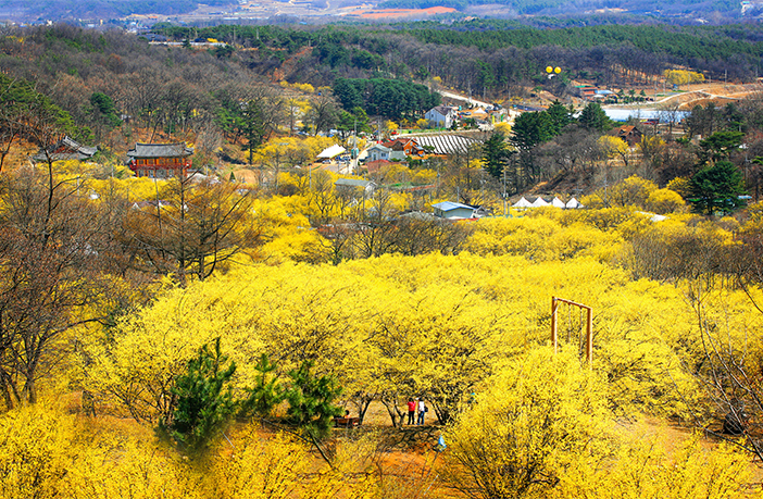 利川山茱萸村(圖片來源: 利川市)