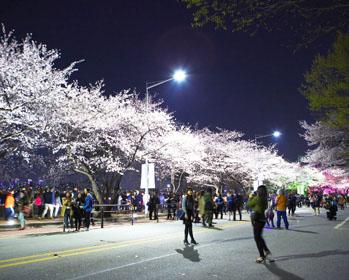 樱花盛开的汝矣汉江公园