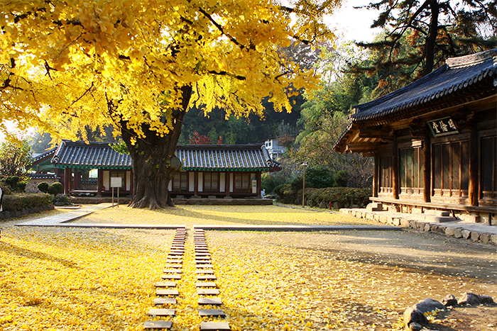 Autumn at Jeonjuhyanggyo Local Confucian School (Credit: Jeonju City Hall)