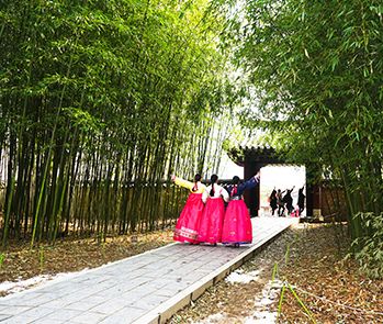 Bamboo grove area that has became a popular photo spot
