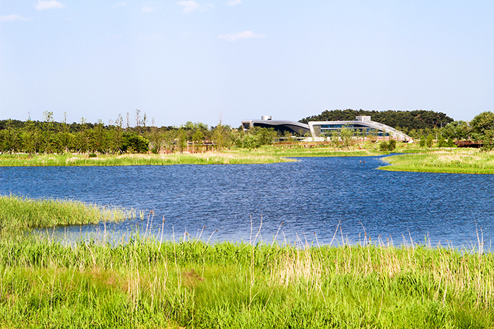Photo:</strong /> Gyeongpo prickly water lily marsh