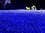 ソウル近郊で開かれるロマンチックなイルミネーションイベント