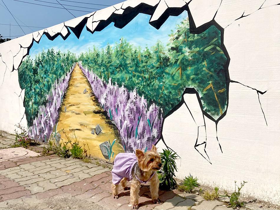 パープル島に向かう途中にある全羅南道新安郡安佐面の道路に描かれた壁画