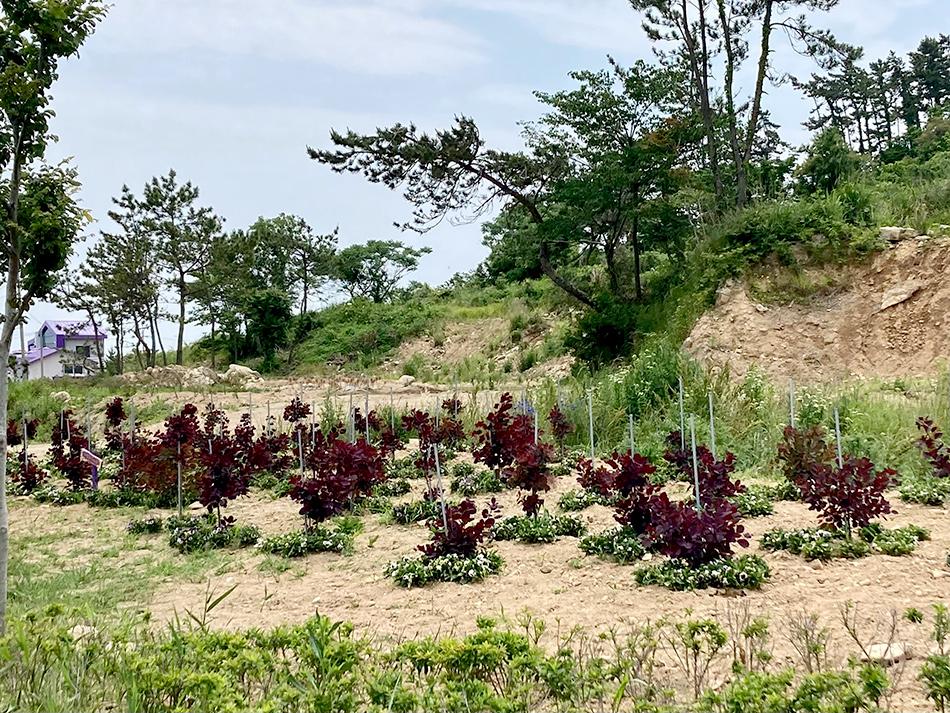 島内の至る所にある紫の植物