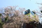 제황산공원 모노레일카