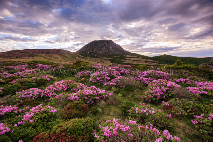 Spring in Hallasan Mountain