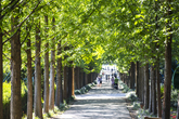 Naju Metasequoia Road