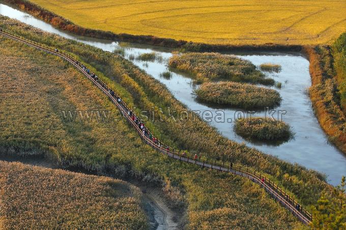 Suncheonman Bay Field of Reeds