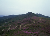 Mt. Hwangmaesan 