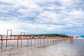 Jjangttungeodari Bridge (Mudskipper Bridge)