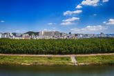 Simni Bamboo Grove on Taehwagang River