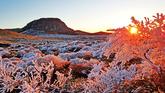 Hoar Frost on Hallasan Mountain