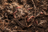 Earthworm Ecological Village